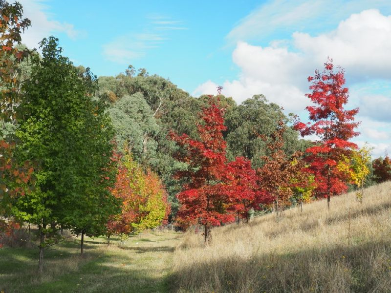 Photo - 142 Red Hill Road, Beechworth VIC 3747  - Image 1