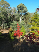 Photo - 142 Red Hill Road, Beechworth VIC 3747  - Image 2