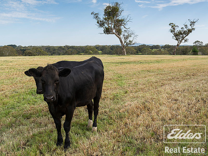 Photo - 189 Hillyfields Road, Kangarilla SA 5157  - Image 13