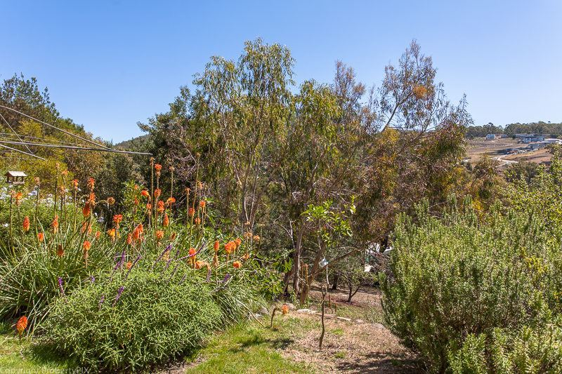 Photo - 81 Wentworth Street, South Hobart TAS 7004  - Image 16