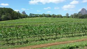 80 Acres of Prime Farmland Beerwah