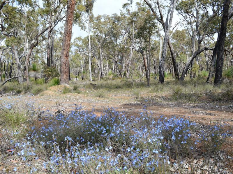 P O L7867 Parsons Swamp Road Boyup Brook Wa