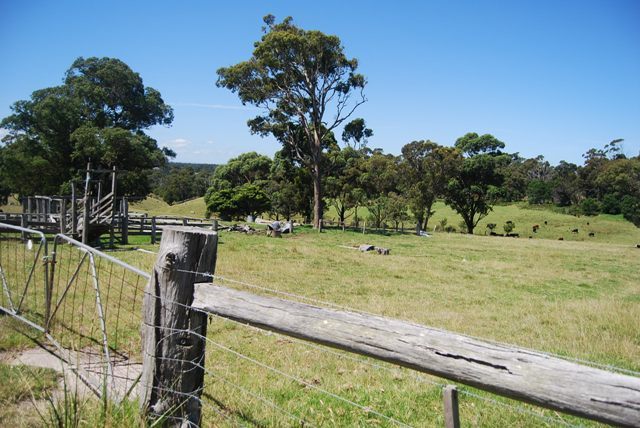 Photo - Lot 1 Thorpes Lane, Lakes Entrance VIC 3909  - Image 5