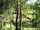 Photo - Toowoomba QLD 4350 - Image 3